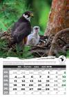 Najkrajší kalendár dravcov a sov 2018