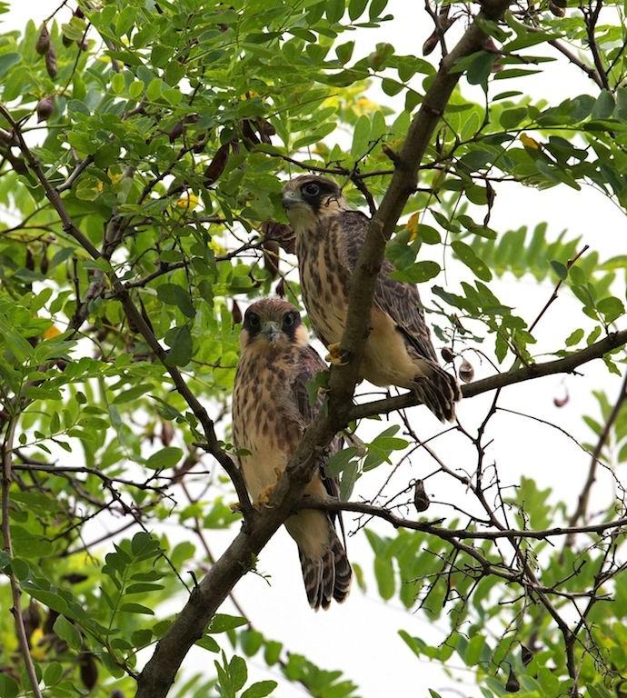 veľké mláďatá s veľkými vtákmi