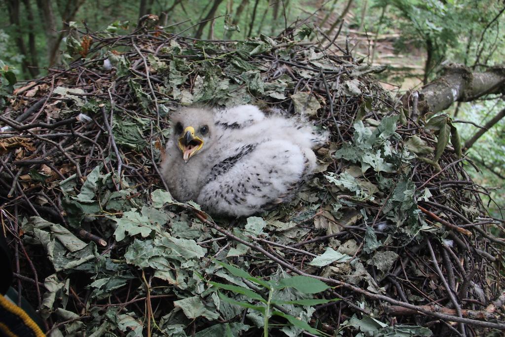 Príbeh jedného hniezda