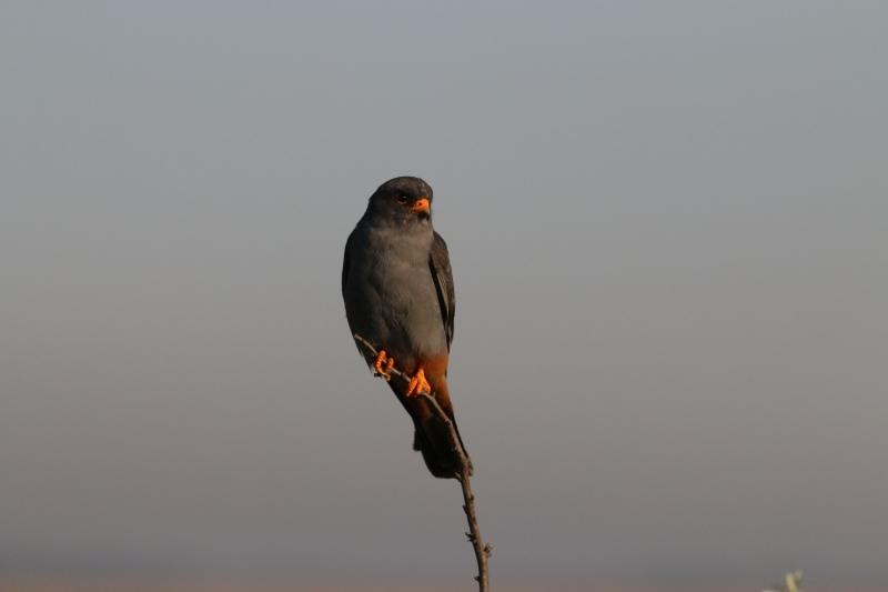 Malé mláďa veľké vtáky
