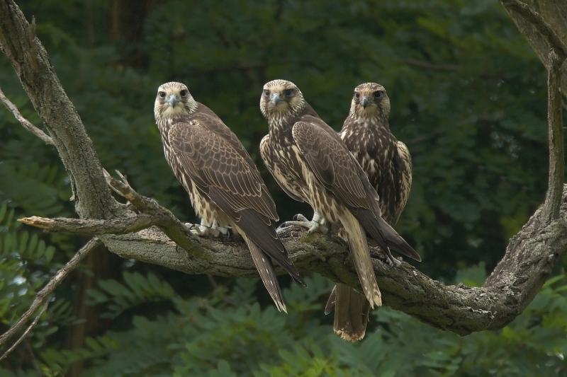 mláďatá a veľké vtáky