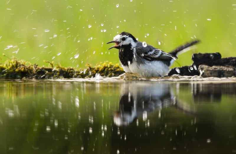 Horúce mláďatá s veľkými vtákmi