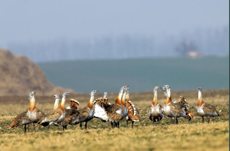Veľké vtáky malý svet