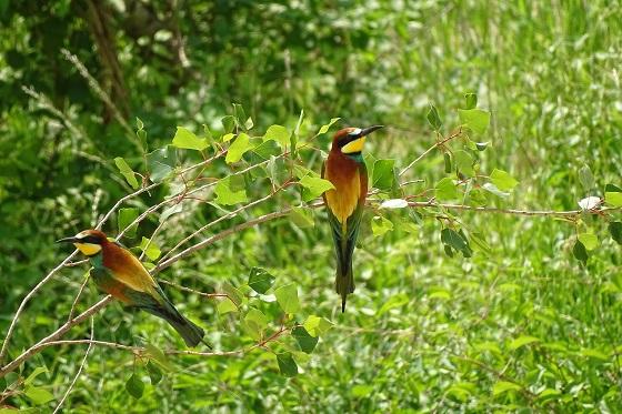 Veľké čierne vtáky drobné biele mláďatá
